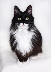 Katzenfoto Fotograf Lippstadt