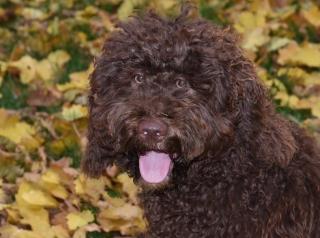 Tierfoto Lippstadt Hund