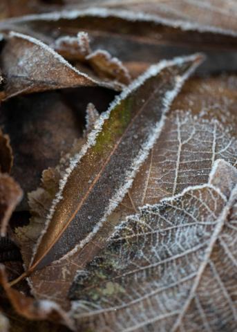 Blätter 2