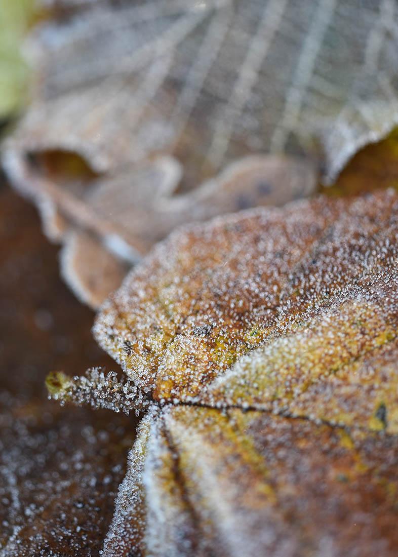 Blätter1